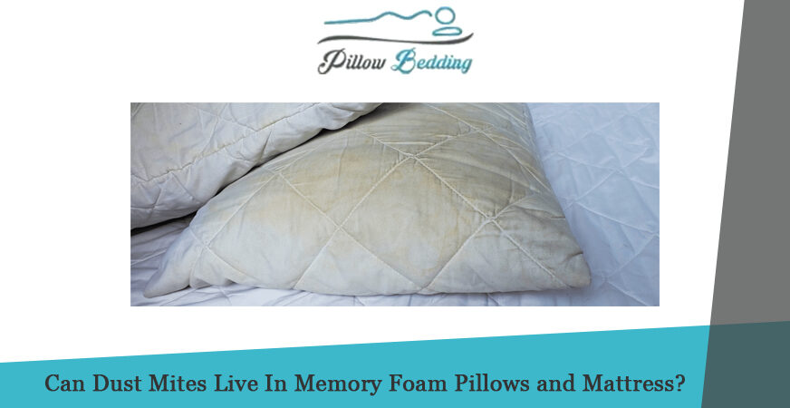 Can Dust Mites Live In Memory Foam Pillows and Mattress